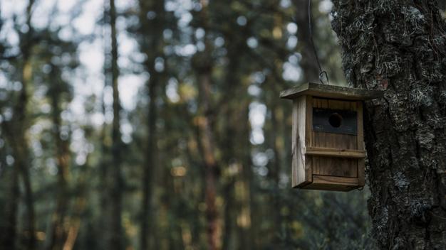 fodring af fugle