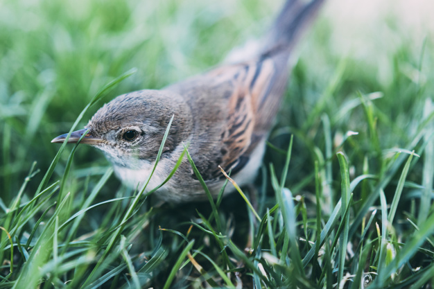 fugle i din have