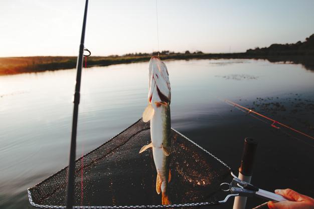 dagens fangst